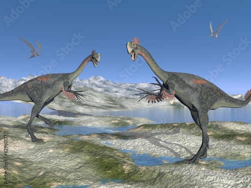 Two gigantoraptor