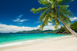 tropical beach with palm - 62962173