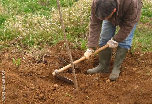 Plantando un arbolito
