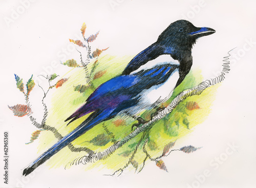 Watercolor magpie