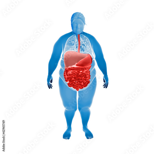 Overweight Female with hihglighted digestive system