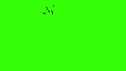 Pack of two flying flock of birds on green
