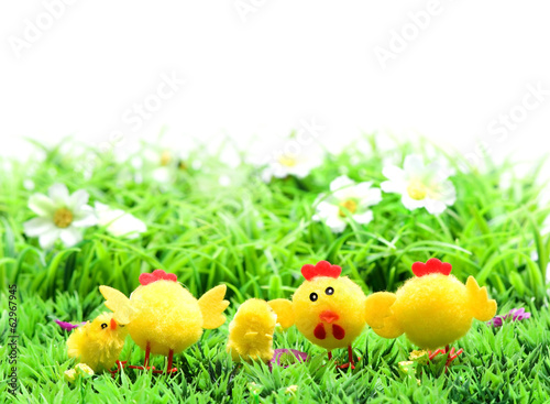 Yellow Easter chicks ,hen in a field