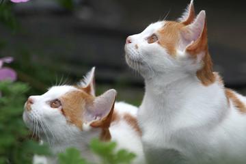 草陰で空を仰ぐ猫