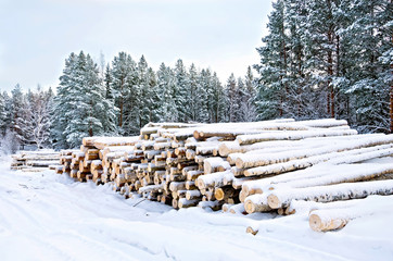 Timber on the snow in winter