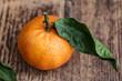 Frische Mandarinen