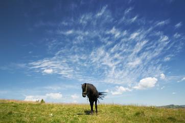 Black Horse Agaist Sky, Serbia