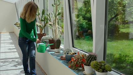 cactus plants grow in conservatory and woman water watering-can