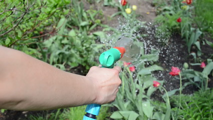 Hand of gardener hold garden hose and watering flowers in spring