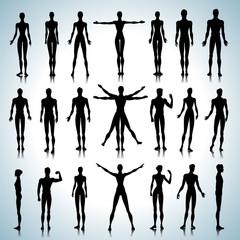 Anatomy silhouettes