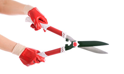 Garden shears in the hands of the gardener. isolation