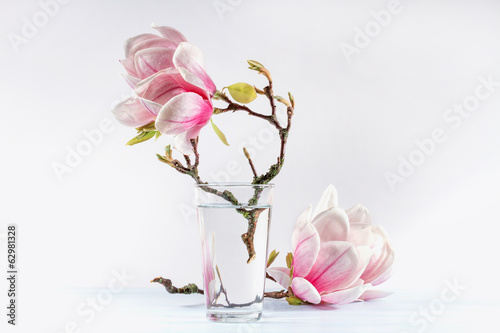 Foto op Canvas Magnolia Still life with blooming magnolia