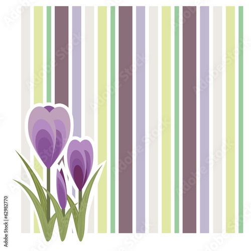 Three crocuses on a striped background