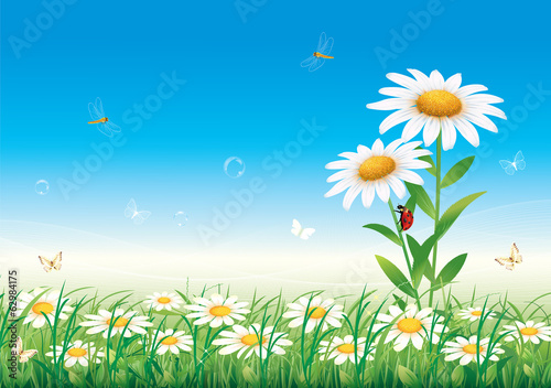 Chamomile meadow on a background of blue sky