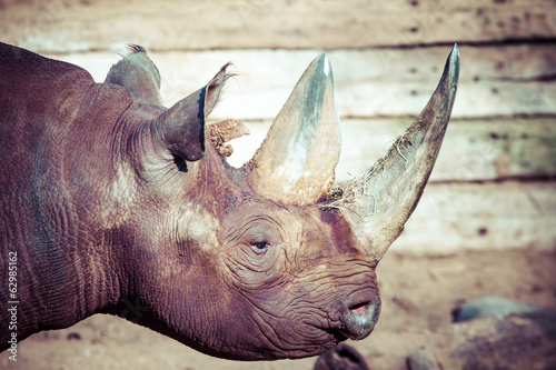 Black rhino head over blurred background.