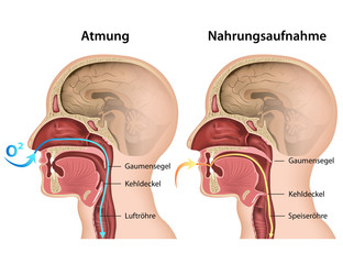 Unterschied Atmung - Nahrungsaufnahme