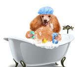 Dog washes
