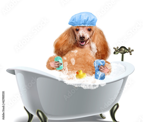 Dog washes