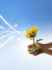 Give eco energy with hands, sunflower energy