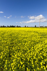 yellow flower landscape