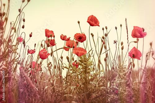 Zdjęcia na płótnie, fototapety na wymiar, obrazy na ścianę : Poppy flowers