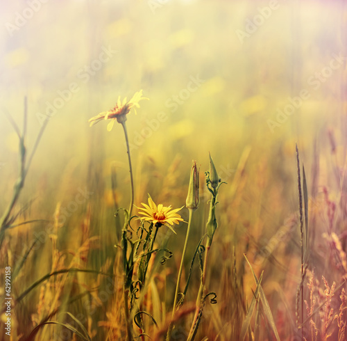 Flowering yellow meadow flowers in spring