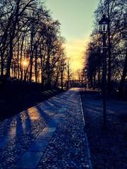 viale al tramonto
