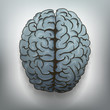 Human brain. View from above. Vector.