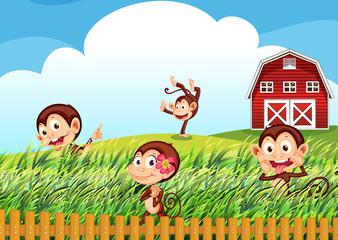 A farm with monkeys