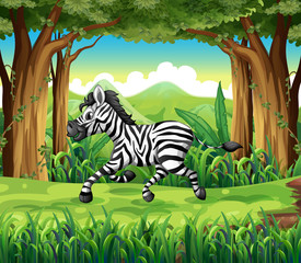 A zebra at the jungle