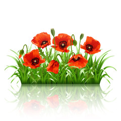 Red poppies in grass., vector