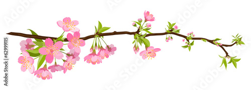 kirschbaum, kirsche, blüte, cherry blossom, bloom, branch, tree