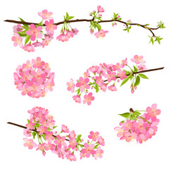 Kirsche, Blüte, Set, Gruppe, Cherry Blossom, Bloom, Branch, EPS