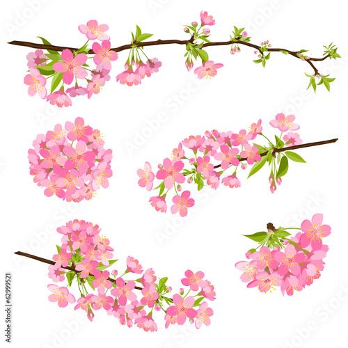 Kirsche, Blüte, Set, Gruppe, Cherry Blossom, Bloom, Branch, EPS - 62999521