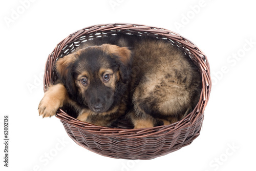 puppy in a basket