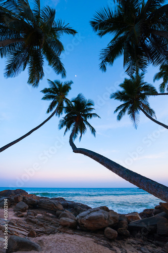 Coconut palms on tropical beach at sunset, Sri Lanka
