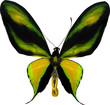 illustration with tropical yellow and green butterfly