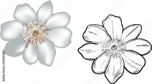 two white small isolated blooms
