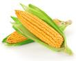 Raw corn vegetable