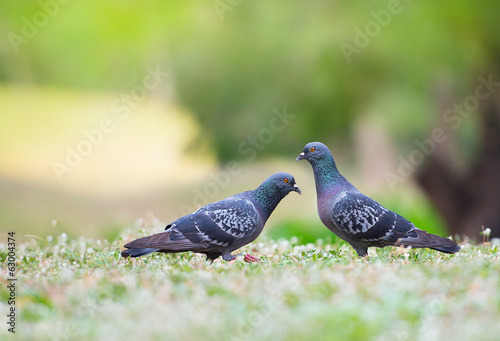 Beautiful couple bird