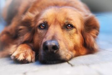 Close-up of mixed-breed  dog