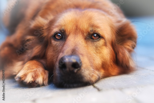 canvas print picture Close-up of mixed-breed  dog