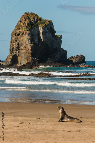 female sea lion resting on beach