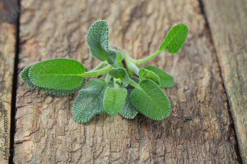 sage on a wooden surface
