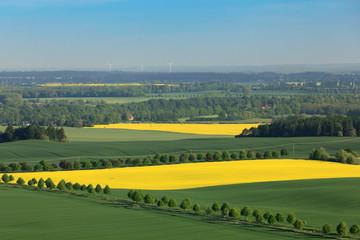 Luftaufnahme Landschaft Wiese und Rapsfeld