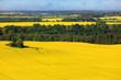 canvas print picture - Luftaufnahme Landschaft mit Rapsfeld