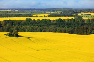 Luftaufnahme Landschaft mit Rapsfeld
