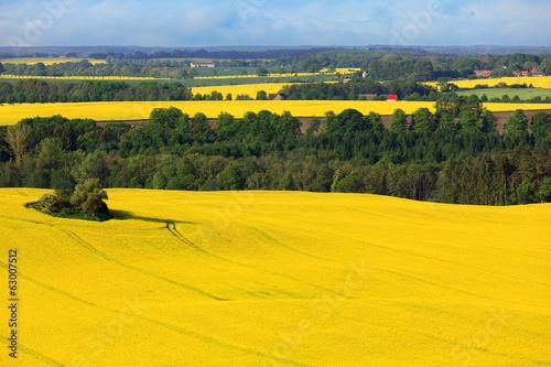 canvas print picture Luftaufnahme Landschaft mit Rapsfeld