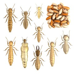 realistic 3d render of termite set