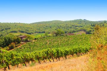 Campo vitigno